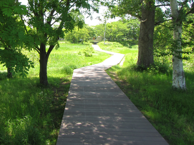 Natural park type wooden footpath (moor exploration road)