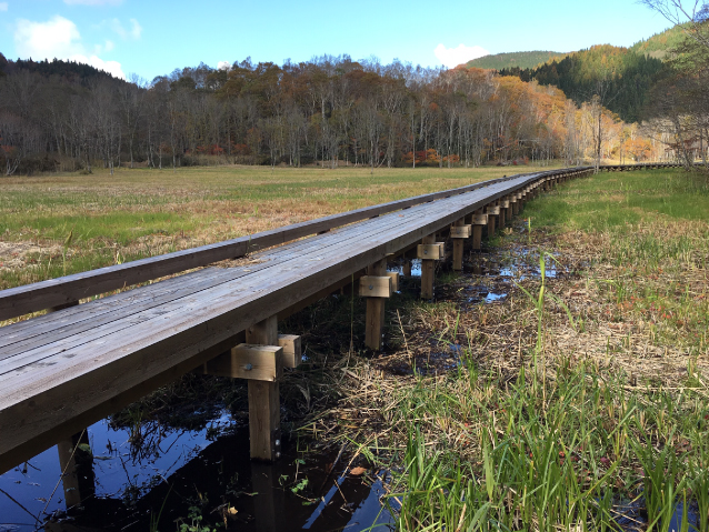 Natural park type wooden footpath (wetland exploration wooden footpath)